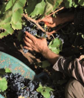 uva con la mano